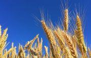Growing export of Ukrainian grain