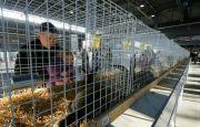 Olbrzymie króliki znów w Targach Kielce