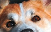 Badania okulistyczne dla psów wTargach Kielce