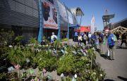 Ogród i Ty – jakie rośliny kupisz podczas targów?
