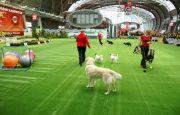 5600 psich piękności w Targach Kielce