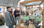 THE NATIONAL EXHIBITION OF PEDIGREE PIGEONS AND SMALL LIVESTOCK AT TARGI KIELCE