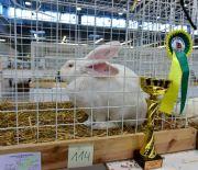 Najpiękniejsze króliki wTargach Kielce