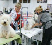 Najbardziej wyczesane wystawy psów rasowych ruszyły w Targach Kielce!