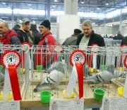 Regionalne wystawy gołębi i królików ruszyły