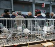 PIGEONS AND RABBITS REGIONAL EXHIBITIONS HAVE COMMENCED