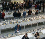 Trwają regionalne wystawy gołębi i królików