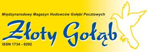 wystawa-golebi-b-logo-zloty-golab