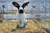 Inwazja królików w Targach Kielce