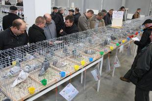 regionalne wystawy gołębi 2014 - bp 01