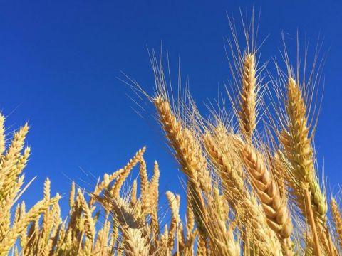 Targi Techniki Rolniczej EURO-AGRO we Lwowie, organizowane we współpracy Targów Kielce z ośrodkiem GalExpo to okazja do wymiany doświadczeń i nawiązania owocnej międzynarodowej współpracy pomiędzy ukraińskimi rolnikami, a przedsiębiorcami zPolski