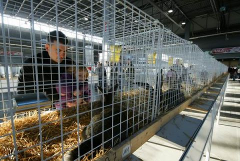 Podczas zeszłorocznej wystawy w Targach Kielce można było zobaczyć 500 królików rasowych