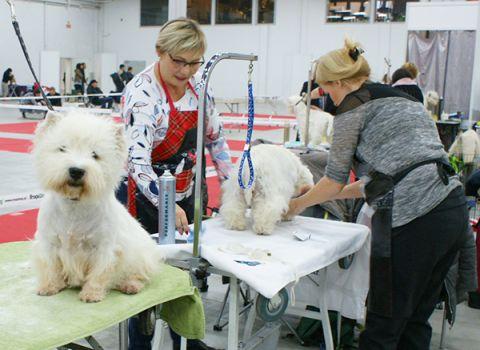 Ponad 8,5 tysiąca psich piękności prezetuje się w Targach Kielce od 24-26 listopada.