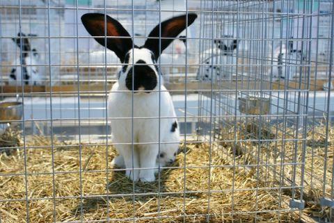 Record breaking Rabbit Show on December 7 and 8 at Targi Kielce